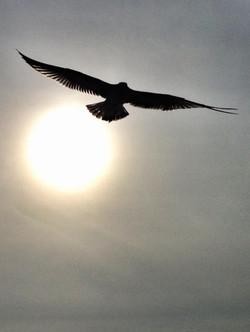 I wish I could fly...