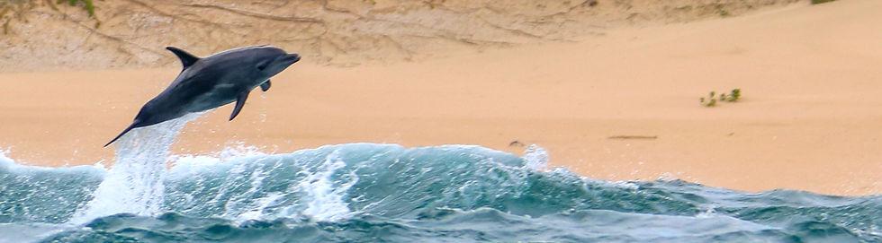 280419 0930 SURFING   DCA 0006_edited.jp