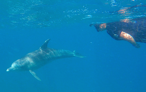 Reeva sharing her first circle swim with our local #dolphinsofponta