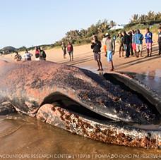 Humpback Whale September 2018