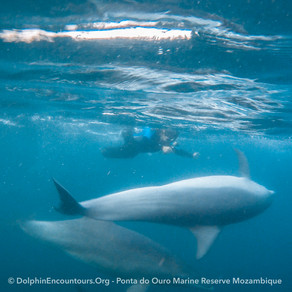 Dolphin Diary 180521