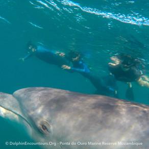 Dolphin Diary 010821