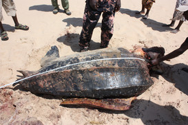 Leatherback Poached