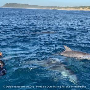 Dolphin Diary 120621