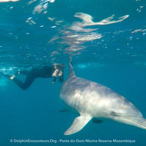 Dolphin Diary 170721