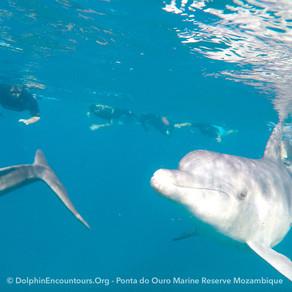 Dolphin Diary 100521