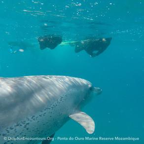 Dolphin Diary 300521