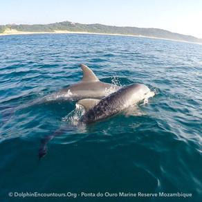 Dolphin Diary 310721