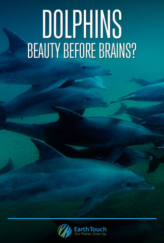 Dolphins Brains Before Beauty 2009