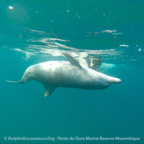 Dolphin Diary 020721