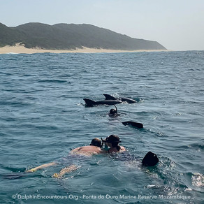 Dolphin Diary 210521