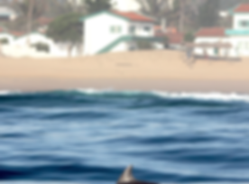 motel and dolphins.png