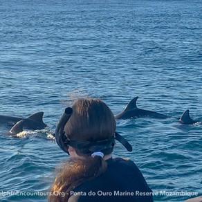 Dolphin Diary 220721