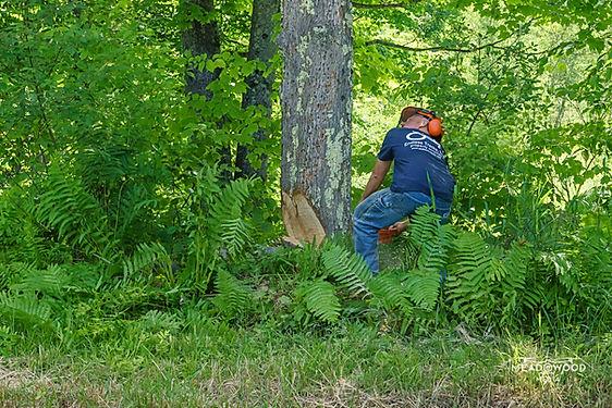 Vermont Tree Removal