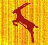 antelope_small.jpg