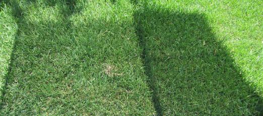 Solar screen shade comparison.