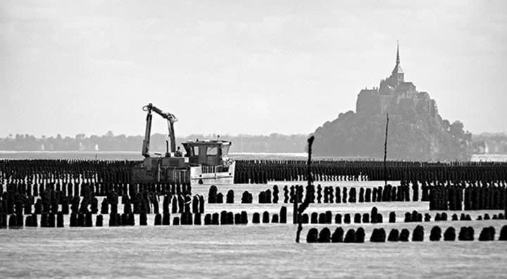 Vue de la baie du Mont Saint-Michel à marée basse et de l'élevage de moules sur des pieux en bois.