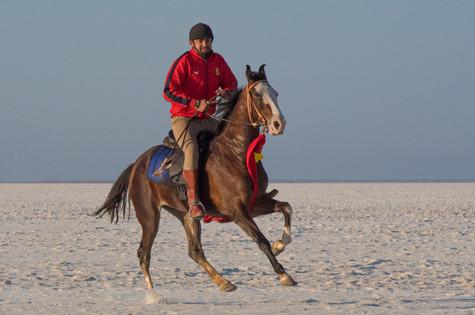 Joan Miller Photography | Horses | India