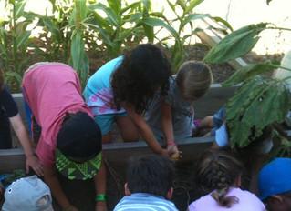 Science for Preschoolers - Potatoes!