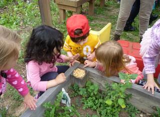 Science for Preschoolers -  Ladybugs