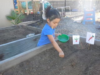 Science for Preschoolers - Growing Vegetable Garden