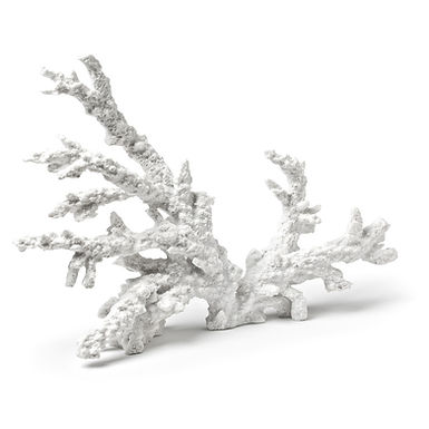 Coral Branch