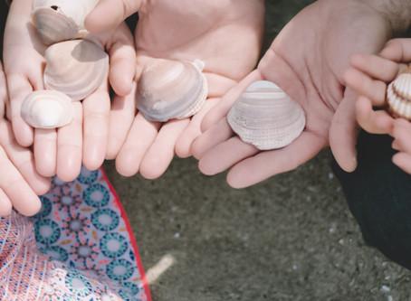 Sesión familiar ♥ Recogiendo conchas y amapolas