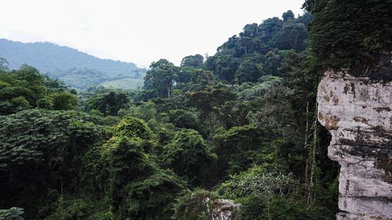 Végétation environnante
