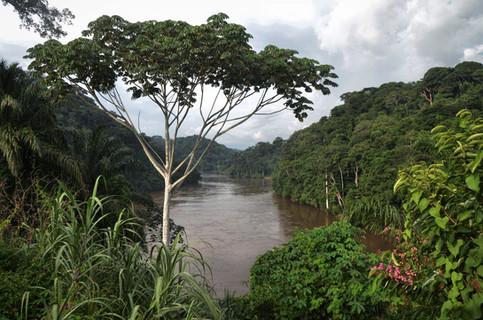 Le fleuve depuis Kakamoeka