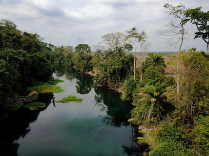 Végétation autour de la rivière bleue