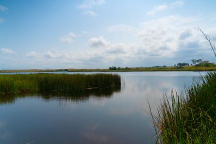 Végétation du lac