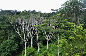 Végétation de la fôret du Mayombe