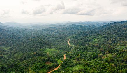Forêt luxuriante près de la chute