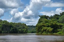 Végétation sur le fleuve Kouilou