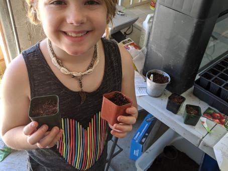 Starting vegetable plants inside