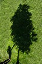 Dziewczynka i drzewo