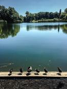Park Szczęśliwicki, Warszawa, Polska