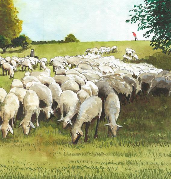 01 Schafe auf der Schanz