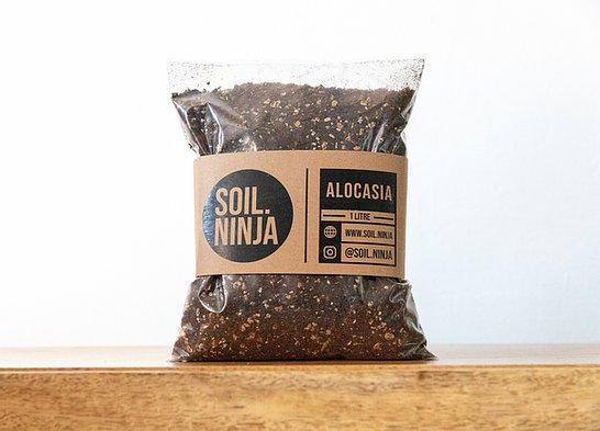 Alocasia Compost