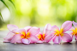 Bigstock- 75523001 - Tropical Frangipani on wooden table for spa and wellness concept.jpg