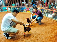 Cockfighting ban in GOP's just passed 2018 farm bill