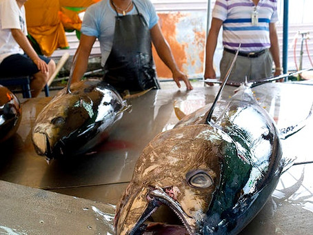 FSM: Tuna poachers, we're watching