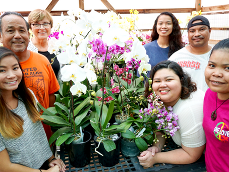 Got an ailing orchid? University of Guam can help