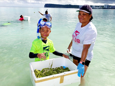 Another nasty algae cleanup set for Guam primary day
