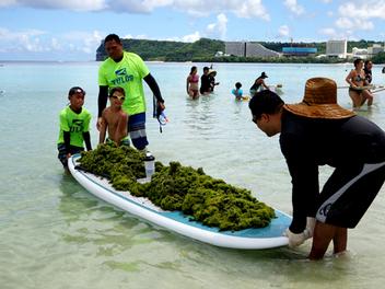 400 volunteers clean up invasive algae at Guam's Tumon Bay