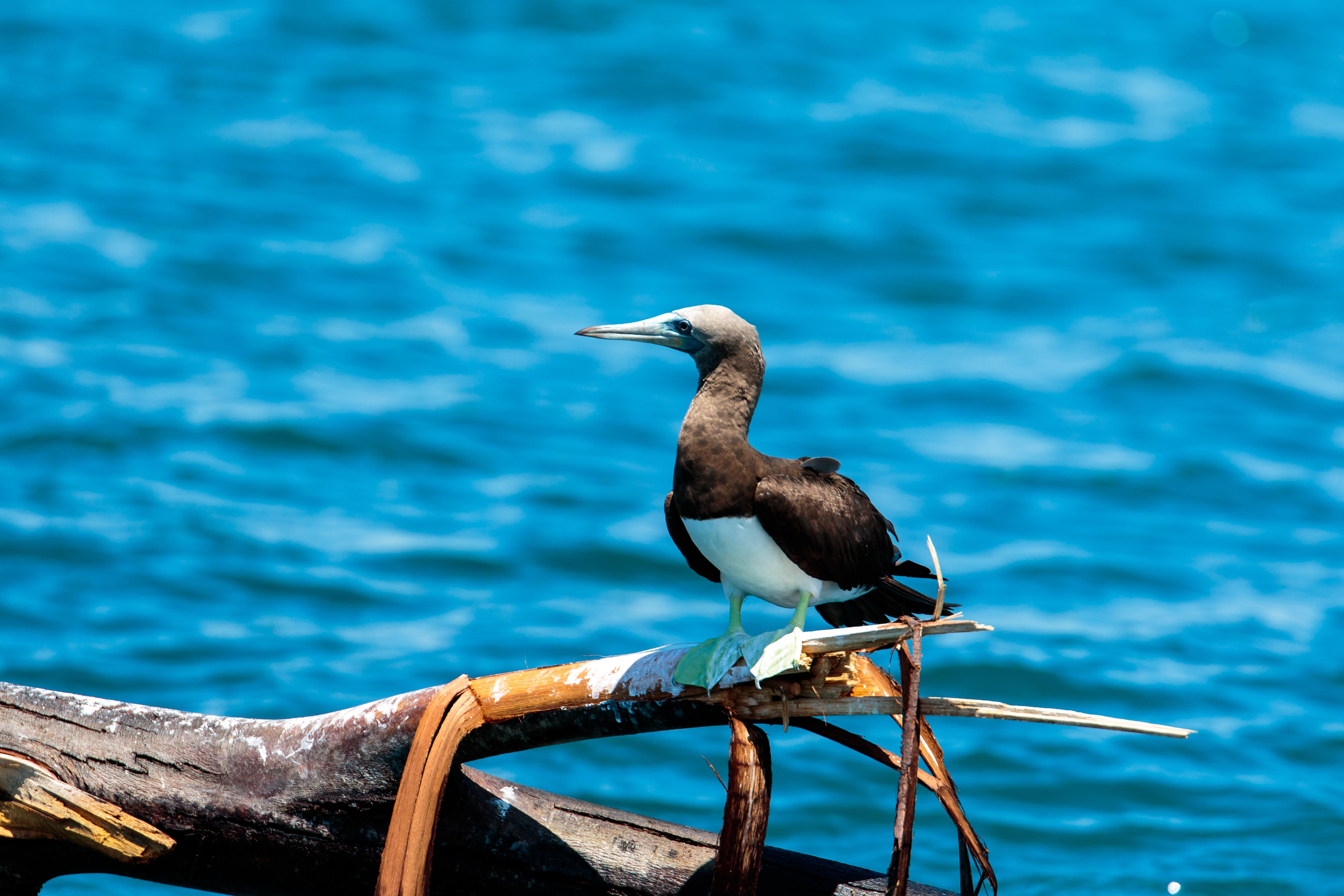 costa-rica-whale-boat-91