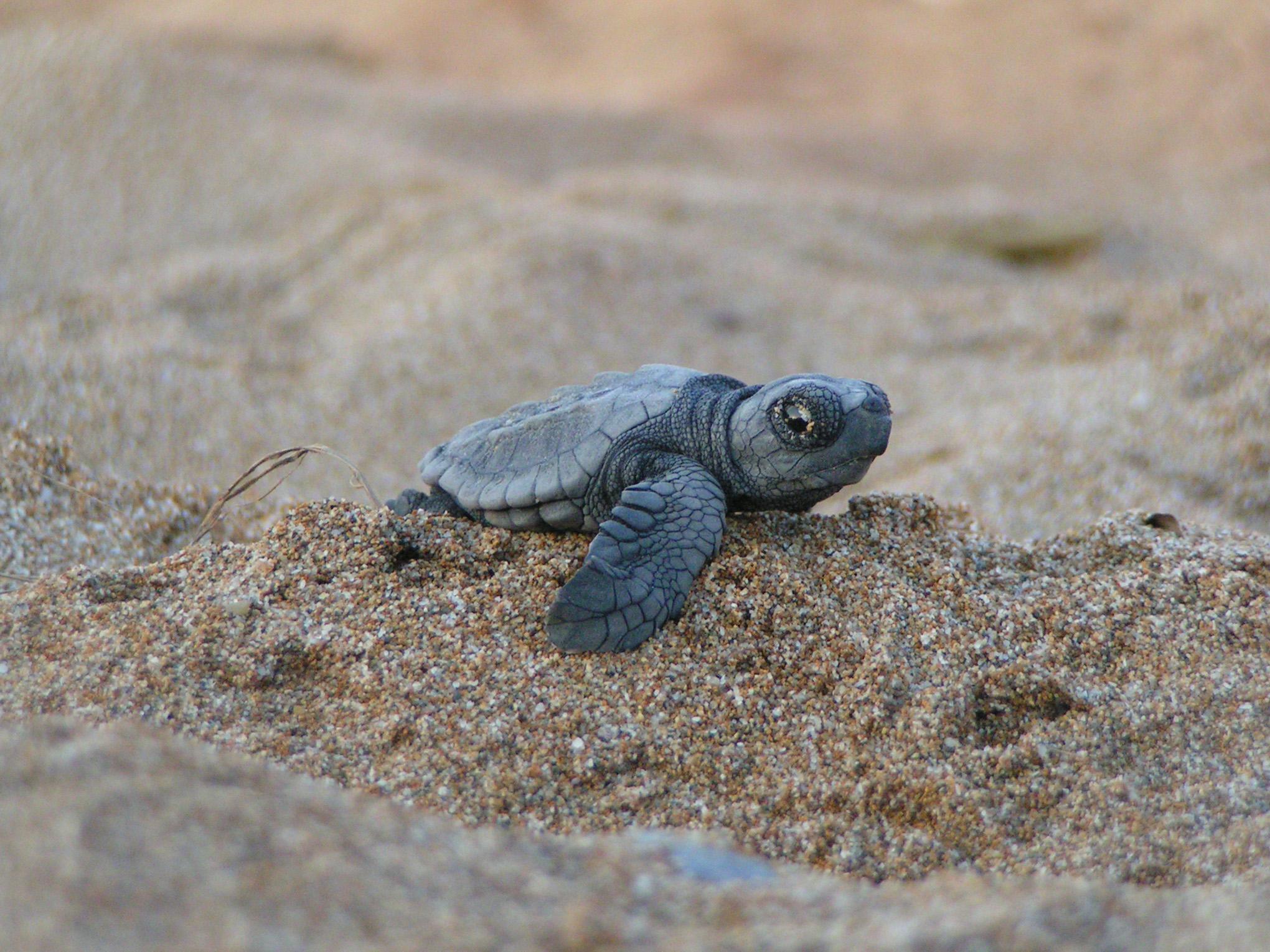 turtle_Alan_Rees[1]