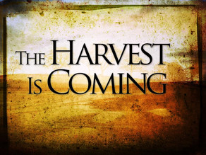 🔥Prophetic Word: Your Harvest Will Drop from the Air