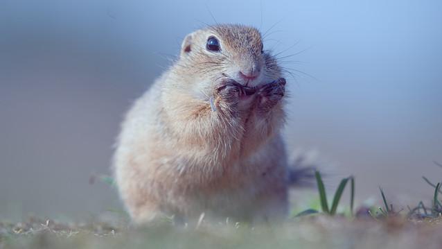 G_Squirrel_190822_0276.jpg