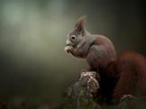 Squirrel_19-11-23_004.jpg